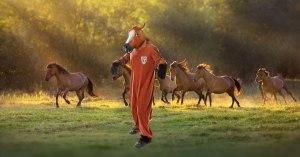 Chevaux mutilés : des policiers déguisés en chevaux pour confondre les coupables