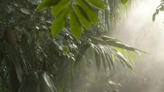 tropics2 btg