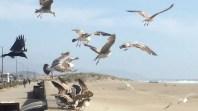 Secret of My SucCecil: at Ocean Beach