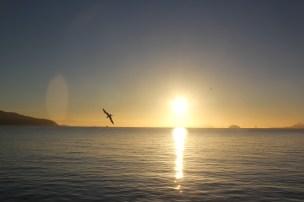 Sunrise on Bridgeway 10-29-15 9953