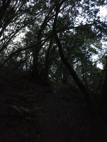 Fernwood at Night_9939