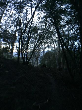 Fernwood at Night_9942
