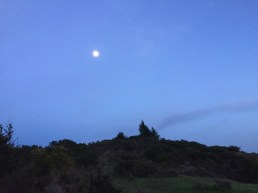Fernwood at Night_9993