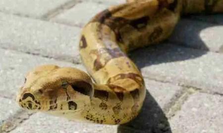 ciclo vicioso Serpiente. Foto de TonoCano/secretOlivo