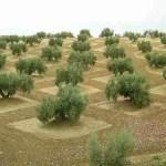 Agricultura, ecología y matemáticas