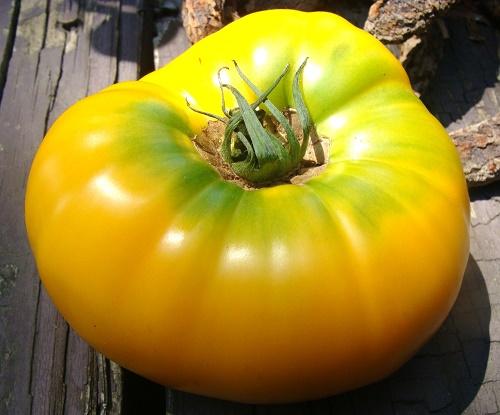 Yellow/Orange Tomatoes