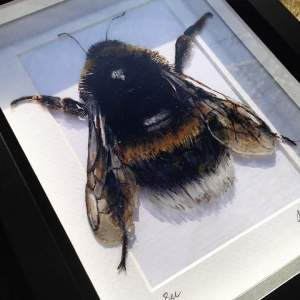 Bee Painting on Glass Framed