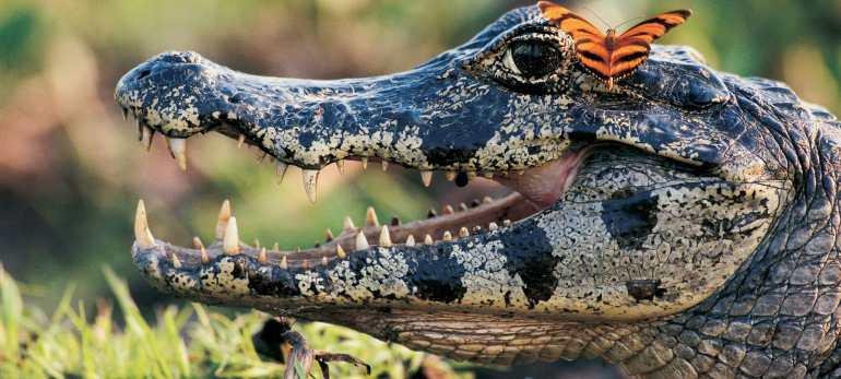 Esteros del inbera argentina iguazu