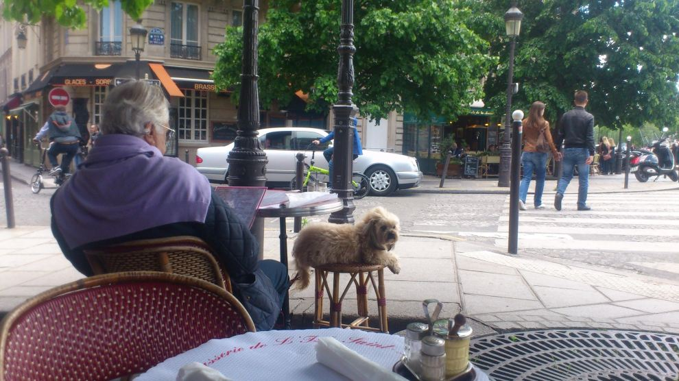 dog at cafe