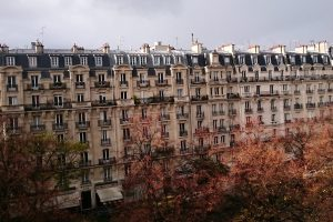 fall trees in Paris