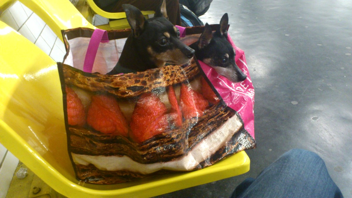 Dogs in Carry Bag