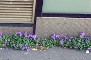 flowers in sidewalk crack