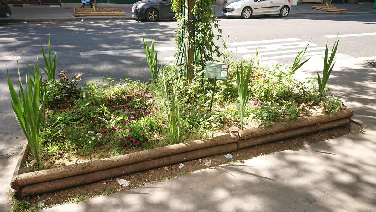urban garden patch