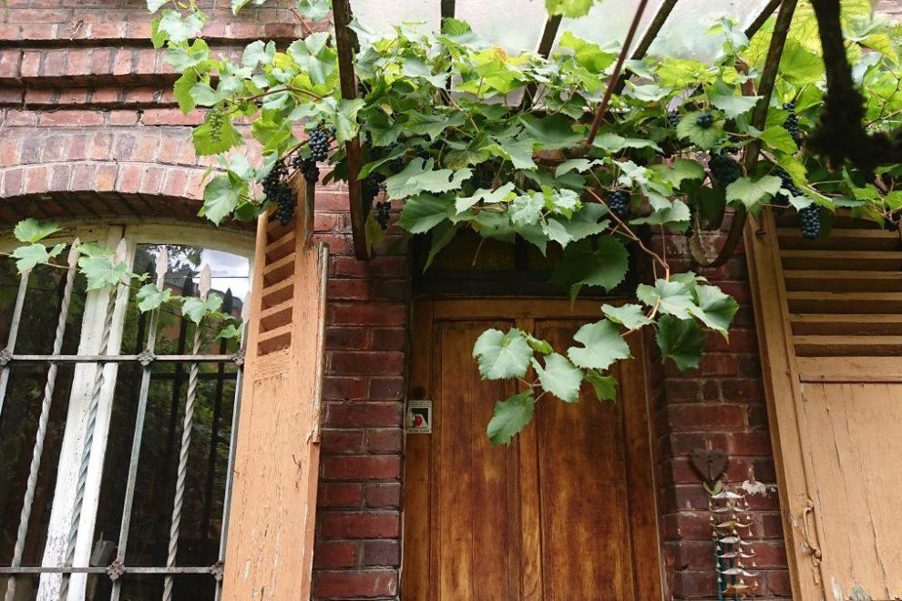grape vines over doorway
