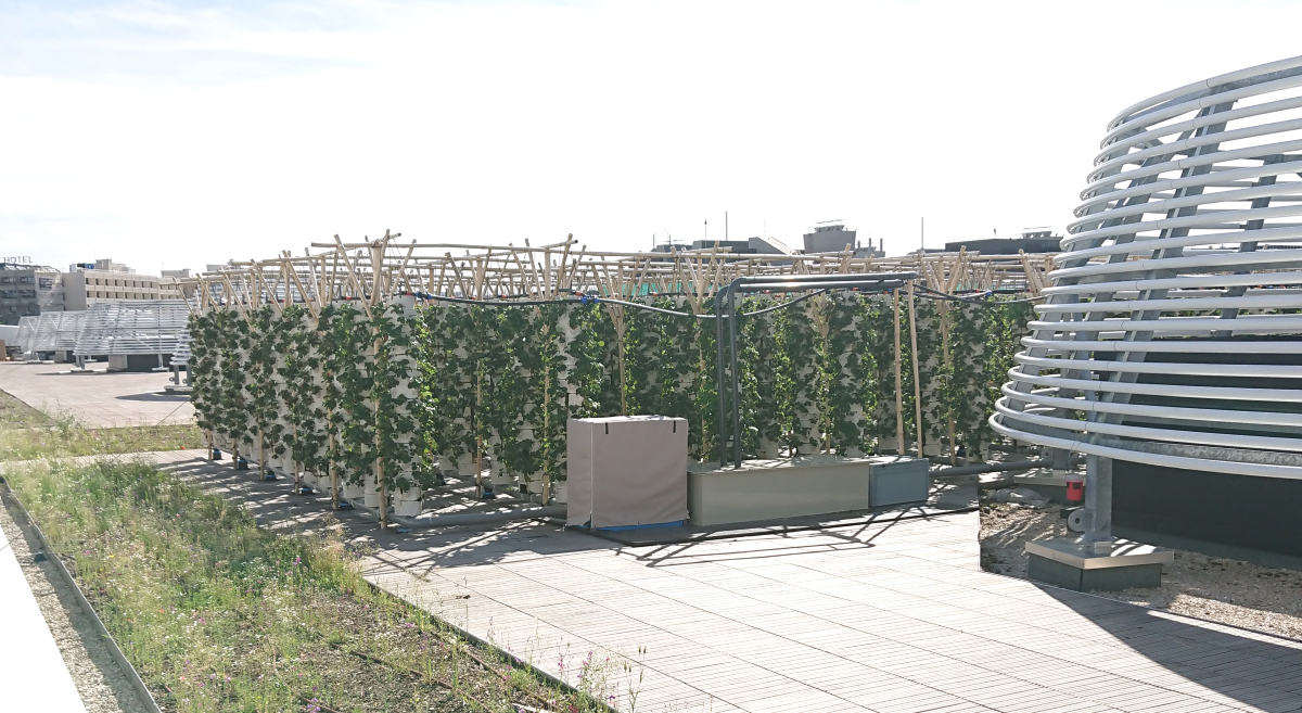 Aeroponic plantations at Nature Urbaine