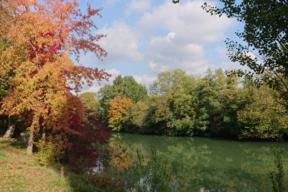 Marne river fall leaves
