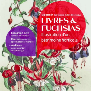 Fuschsias and books flyer