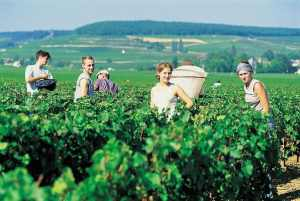 beaune burgundy secret wine tour