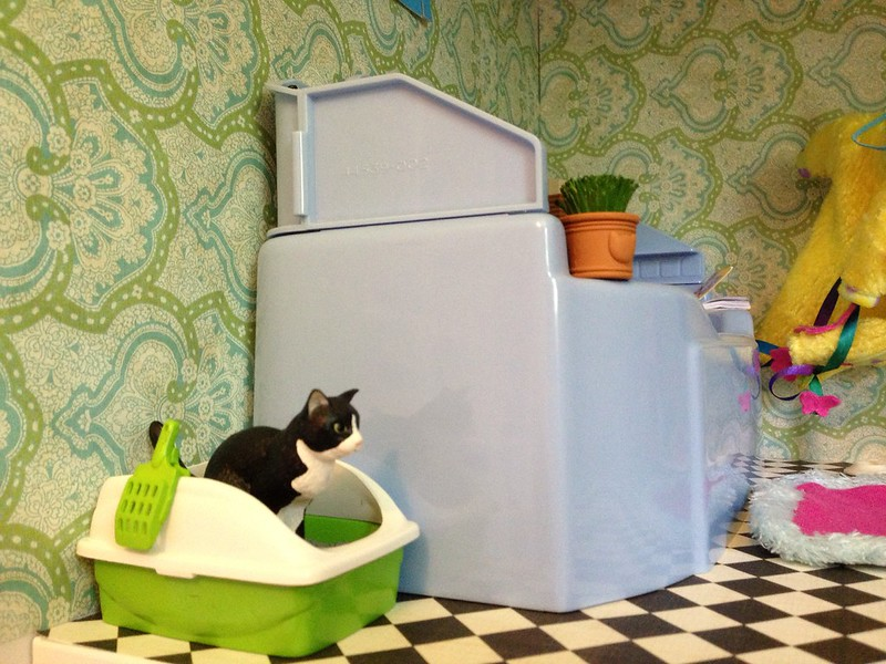 Cat Spraying: Put the litter box where your cat like to eliminate