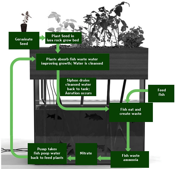 How does an aquaponics system works