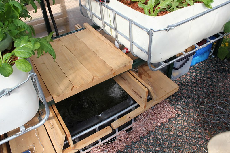 Start your own aquaponics in your own backyard to grow your own green vegetables