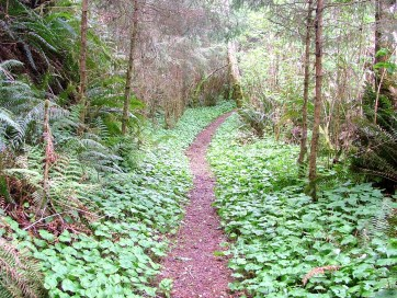 Forest Path, North California