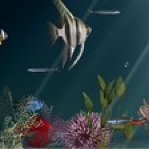 >40% Off Coupon code Aqua Coral Reefs 3D (Updated)