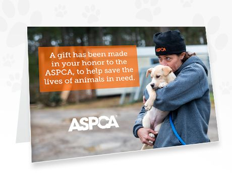 Honor Gifts L Tribute L Send A Card L Ways To Give L ASPCA