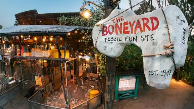 Image result for disney world boneyard