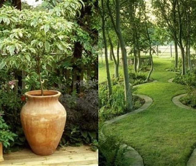 Dogwood In Urn And Serpentine Grass Pathways Planning A Garden For A Non Gardener