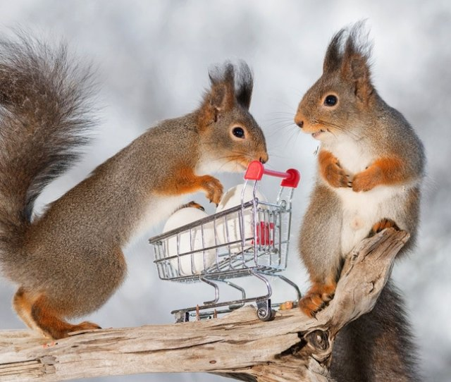 These Little Squirrels Prepare For The Easter Break As They Fill Their Shopping Trolley With Eggs