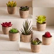 8 Piece Faux Succulent Set