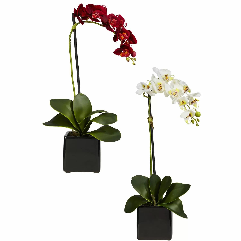 Fake Orchids Phalaenopsis