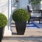 Three Posts Boxwood Ball Square Boxwood Topiary In Planter Reviews Wayfair