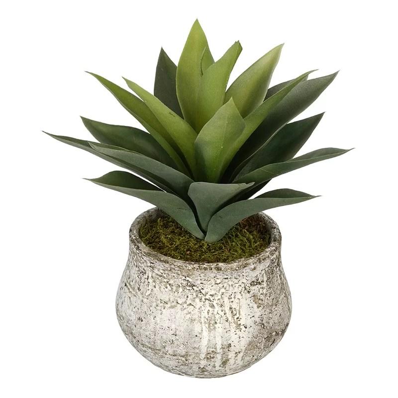 Decorative Succulents Plants