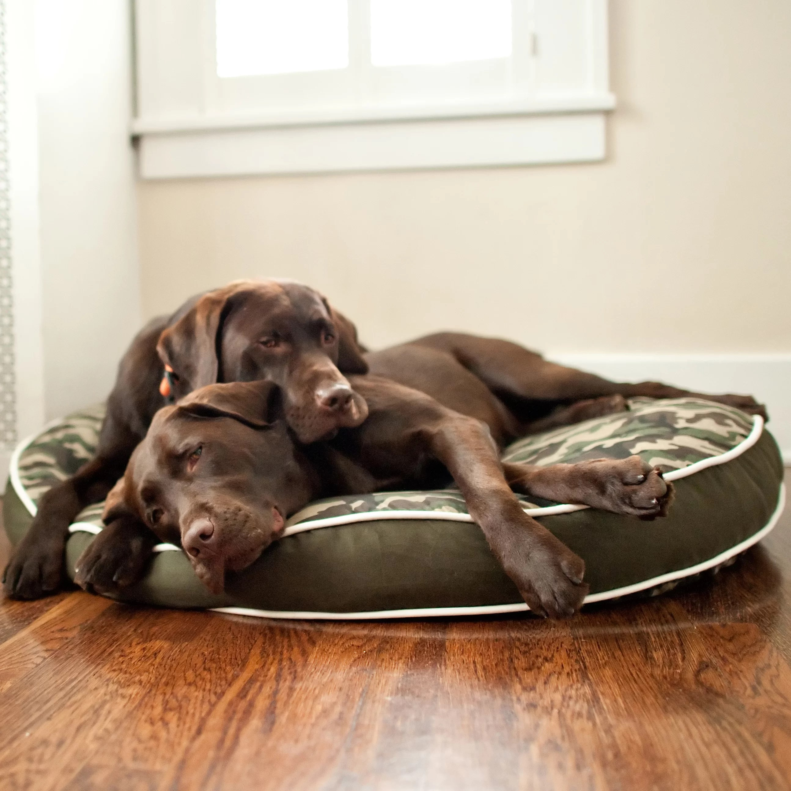 backyard camouflage round pillow pet bed