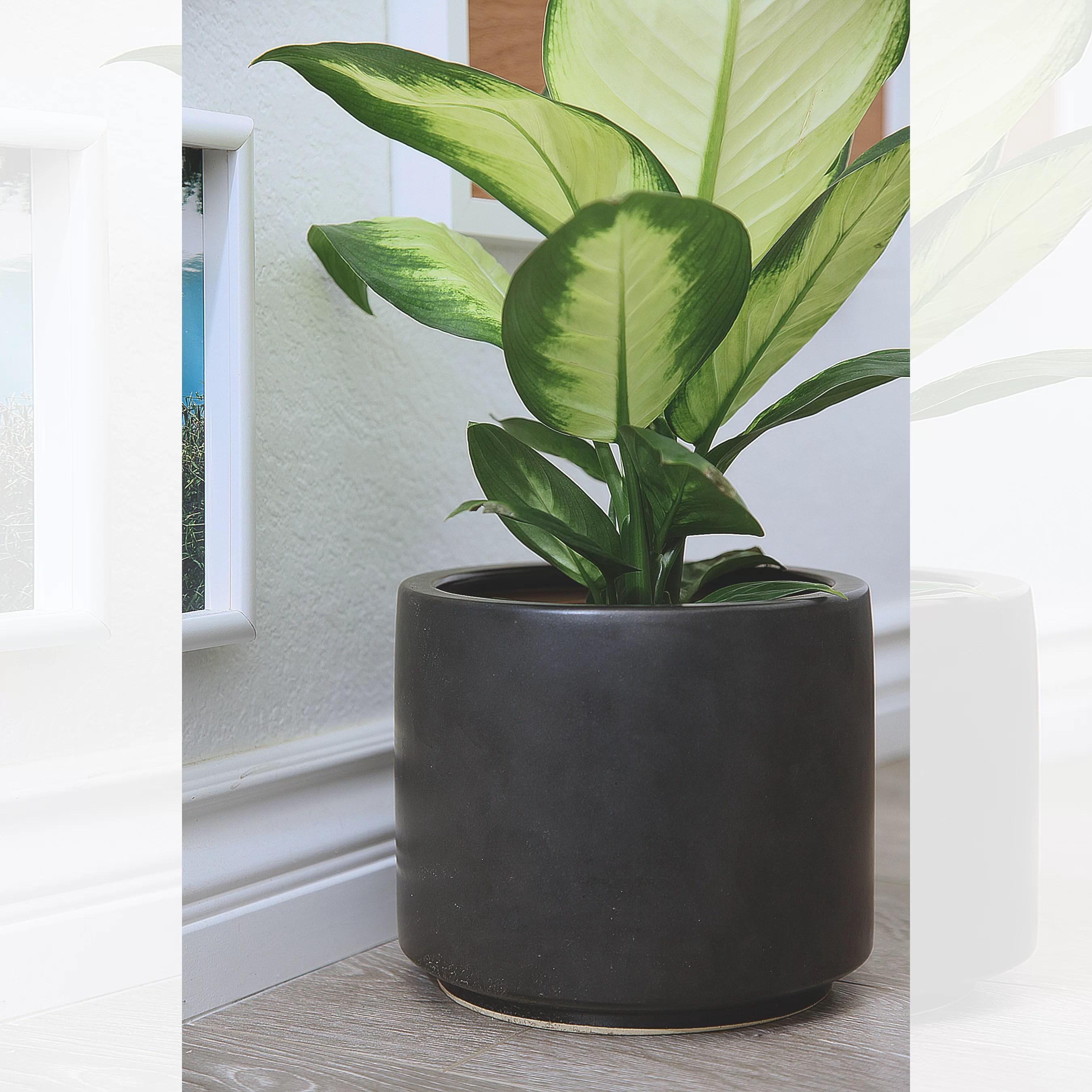 wayfair black planters you ll love in
