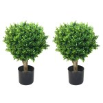 Hedyotis Boxwood Topiary In Pot Reviews Joss Main
