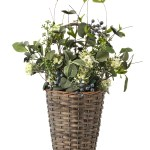 Ophelia Co Blueberry And Lace In Wicker Basket Wall Decor Reviews Wayfair