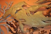 Hammerhead Shark Artwork from Tiffin's at Animal Kingdom at Walt Disney World Resort