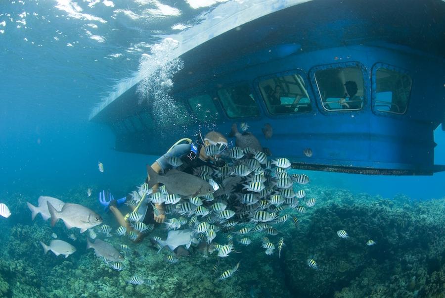 SeaWorld Observatory Semi-Submarine Port Adventure With Disney Cruise Line
