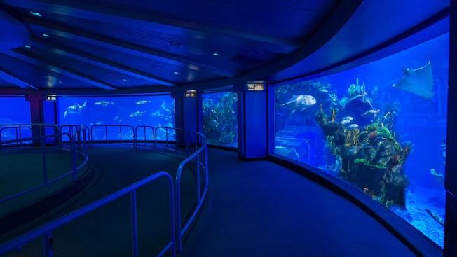 Image result for aquarium epcot
