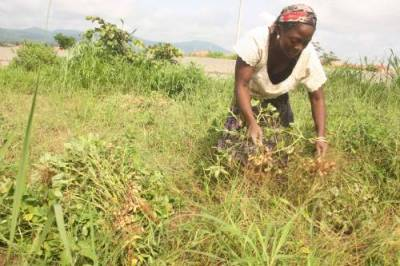World Bank To Give $200 Million To Nigerian Farmers 1
