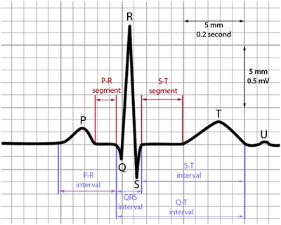 Theory Of Bioelectric Signals And Electrocardiogram