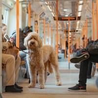 Como levar seu pet para Londres