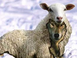 WOLF IN SHEEPS CLOTHING 3