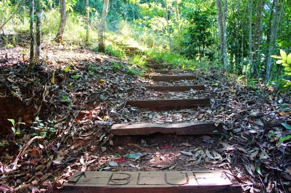 Wooden stairs on the Blue Arrow Trail in Cairns, Australia