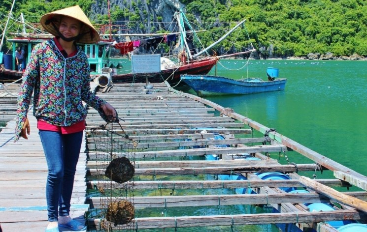 Vietnamese woman in traditional hat holds oyster net in Halong Bay, Vietnam