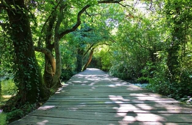 Tree-covered path at Krka National Park