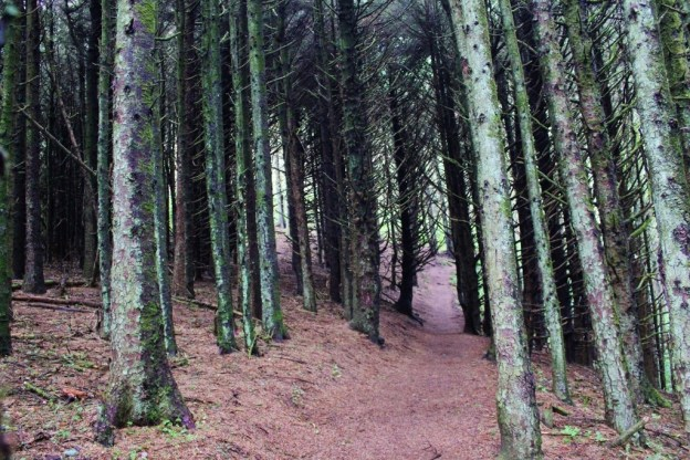 Dense forest along the Heceta Head Trail, one of the hikes near Florence, Oregon